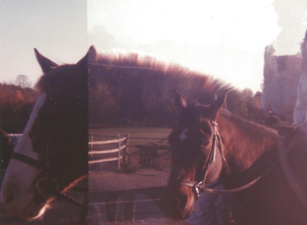 horsebackdoublex.jpeg