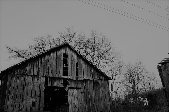barn-all-the-living-review-artful-sequence
